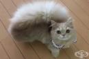 Очарователна котка с пухкава опашка като на катерица
