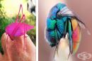 19 редки животни с уникални цветове