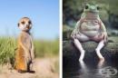 22 интересни факта за животните