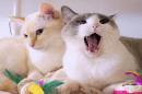 Котки от Япония покоряват интернет със своите танцувални умения