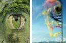 20 завладяващи снимки, които ще ви грабнат от пръв поглед