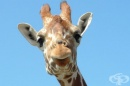 20 интересни факта за животните, които със сигурност не знаете