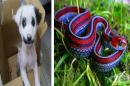 25 невероятни животни с уникални окраски, за които дори не подозираме
