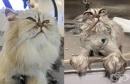 9 котки преди и след баня
