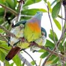 20 снимки на птици, грижещи се за малките си