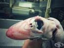 Руски рибар показва странните същества, попадали в мрежите му