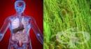 История на незаразните болести