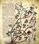 Лечебна флора в древна Тракия през Римската епоха