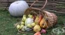 На каква храна да наблегнем през есента