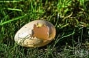 Черупката на кокошето яйце - природен лечител!
