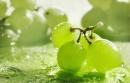 Козметиката M. Asam - красота от силата на гроздето, с традиционно немско качество