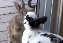 Диво и домашно зайче се влюбват, а любовта им е прекрасна (видео)