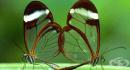 10 животни с прозрачни тела, които са уникално красиви (1 част)