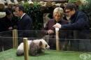 Първата дама на Франция стана кръстница на бебе панда