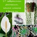17 невероятни растения, които искате в дома си (галерия)