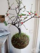 Фантастичните висящи стайни цветя, растения и дръвчета на Федор ван де Фалк (снимки)