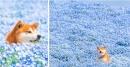Фотограф и неговото куче показват Япония през различните сезони