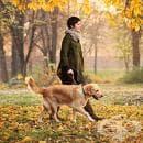 Какво трябва да знаете, преди да си вземете куче за домашен любимец?