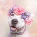 Свежи фотографии на кучета с венци от цветя