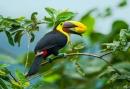 Проучване при птиците показва как формата на тялото им определя функцията им в екосистемата