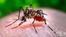 """СЗО: Рискът от разпространение на вируса Зика в Европа е """"малък до умерен"""""""