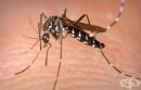 САЩ съобщи за още 4 случая на заразени с вируса Зика