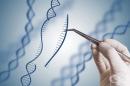 Учени откриха нов подход за редактиране на гени, коригиращ генетични дефекти