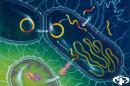 Вече има бактерия, резистентна към всички видове антибиотици
