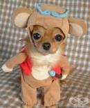 До 1000 лева плаща всeки стопанин на куче с неверни  данни