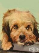 """Кастрират безплатно домашните кучета в бургаския квартал """"Победа"""""""