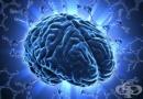 Наградиха с Нобелова награда учените, открили мозъчния GPS