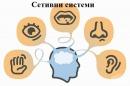 Сетивни системи