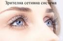 Зрителна сетивна система
