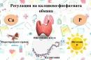Регулация на калциево-фосфатната обмяна
