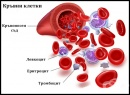 Кръвни клетки