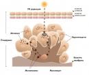 Меланогенеза