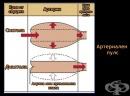 Артериален пулс