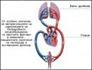 Авторегулация на циркулацията на белодробното кръвообращение