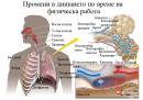 Промени в дишането по време на физическа работа