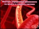 Фактори, определящи движението на кръвта в съдовата система