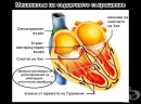 Механизъм на сърдечното съкращение