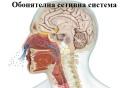 Обонятелна сетивна система