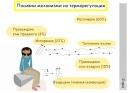 Пасивни механизми на терморегулацията
