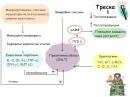 Пирогени и криогени