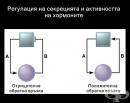 Регулация на секрецията и активността на хормоните