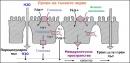 Резорбция на въглехидрати