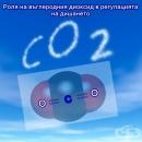 Роля на въглеродния диоксид в регулацията на дишането