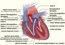 Сърдечен цикъл