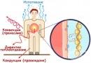 Терморегулаторна функция на кожата