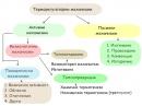 Терморегулаторни механизми
